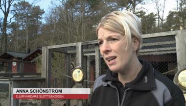 TV: Sommarpremiär för Barnens Zoo