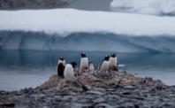 Nytt värmerekord i Antarktis